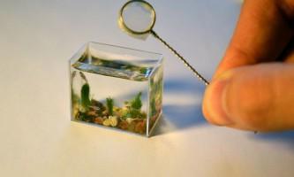 Найменший у світі акваріум з рибками