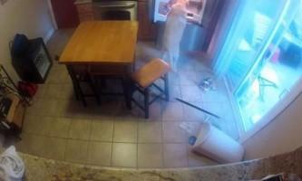 Як собака веде себе вдома, коли залишається одна