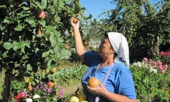 Як зберегти врожай, збір і зберігання врожаю (частина 1)