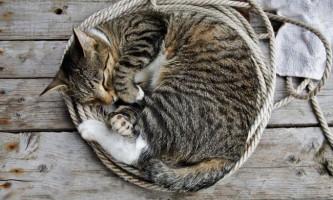 Як сплять тварини?