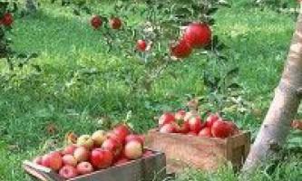 Як уберегти сад?