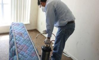 Як знищити клопів в будинку і квартирі
