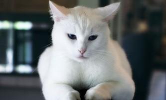 Як дізнатися чи є у кішки глисти? Своєчасна профілактика здоров`я тварини