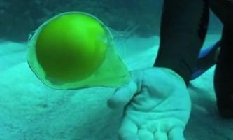 Як поводиться розбите яйце під водою?