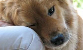 Як виховати слухняну собаку? Правила виховання собаки.