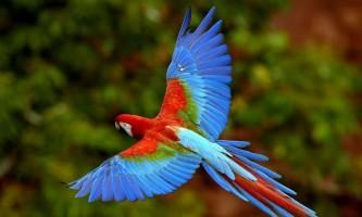 Як вибрати домашнього папугу?