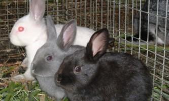 Як вибрати комбікорм для кролів?