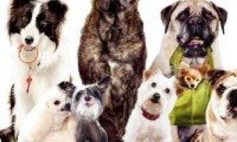 Як вибрати породу собак