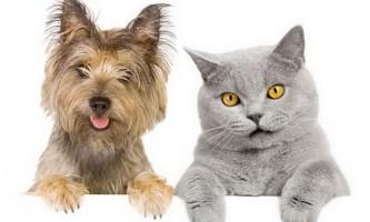 Як вибрати ветеринарну клініку