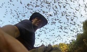 Як виглядають тисячі кажанів, що вилітають з однієї печери?