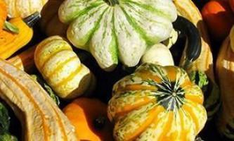 Як вирощується гарбуз декоративна, якою вона буває і навіщо вона взагалі треба?