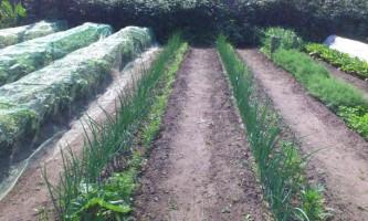 Як виростити високий урожай овочів на городі?