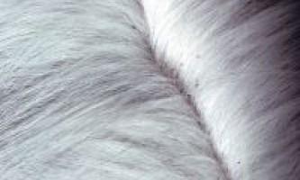 Як вивести бліх у кішки, кота