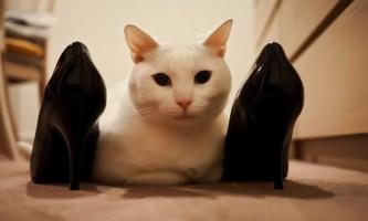 Як вивести запах котячої сечі з взуття?