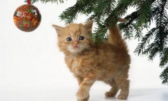 Як захистити кішку і убезпечити свою новорічну ялинку