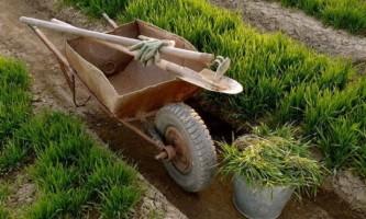 Як захистити рослини від шкідників, кілька способів