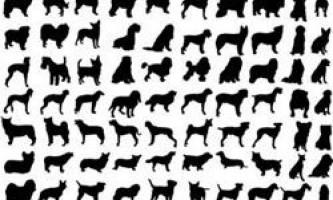 Яка порода собак краще підійде до вашого образу життя?