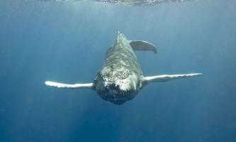 Які бувають кити