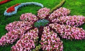 Які квіти будут цвісти протягом літа, опис кращих сортів