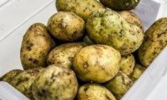 Які бульби картоплі підходять для насіннєвих цілей?