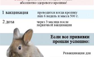 Які щеплення необхідно зробити кроликам і в якому віці