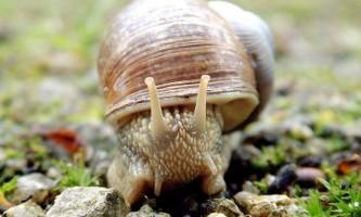 Які тварини належать до типу молюски?