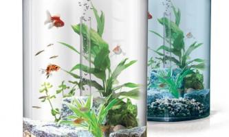 Яких рибок поселити 10 літровому акваріумі?