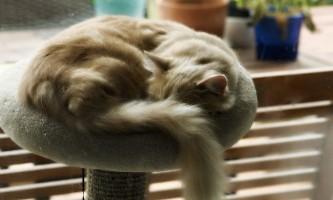 Якими бувають когтеточки і будиночки для кішок?