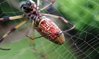 Яке значення в житті павуків має павутина?