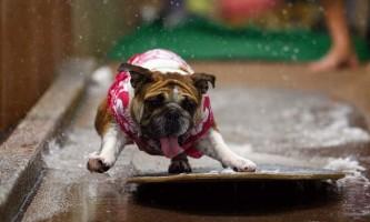 Породи собак, які потребують пильної уваги та догляду