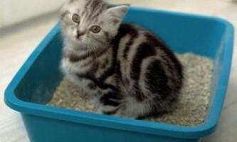 Який наповнювач використовувати для лотка кошеня - силіконовий, деревний або глиняний?