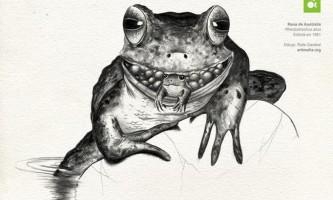 Яку жабу назвали турботливою?