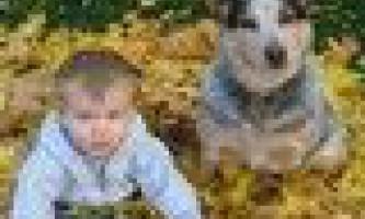 Які породи собак кращі друзі для дітей? Яку собаку вибрати для дитини?