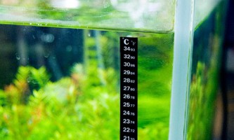 Яку температуру води люблять скалярии?