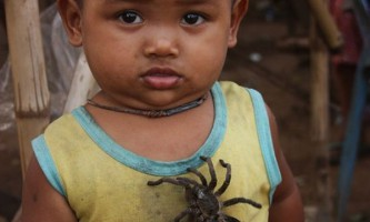 Камбоджа - країна павуків і кешью