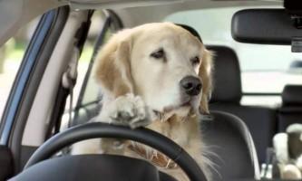 Канадські собаки викрали машину