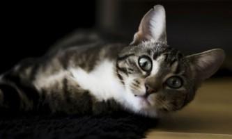 Краплі для кішок екс-5: інструкція із застосування