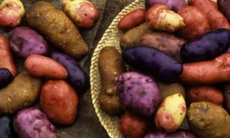 Картопля допоможе від тиску