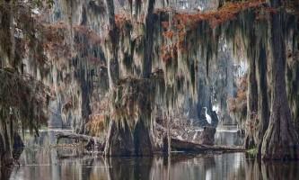 Кипарисовий ліс на озері каддо