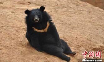 Китаєць два роки тримав вдома ведмедів, прийнявши їх за собак