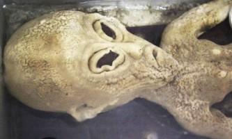 Китаєць зберігає в холодильнику труп інопланетянина