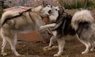 Китай став батьківщиною перших одомашнених собак