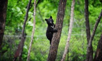 Китайський фермер врятував ведмедика, якого прийняв за цуценя