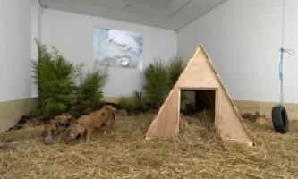 """Китайський художник присвятив виставку """"сильної свині"""""""