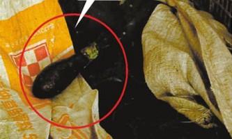 Китайський рибалка виявив авіабомбу в шлунку кальмара