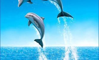 Кити і їх родичі дельфіни - ссавці?