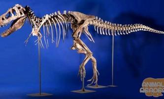 Кладовище динозаврів
