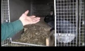 Клітки для кроликів відео
