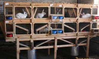 Рекомендації з будівництва клітин для кроликів