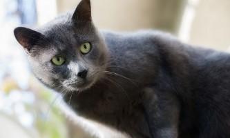 Клички для кішок: імена для дівчаток